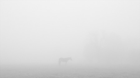 2012, In the Mist of Time