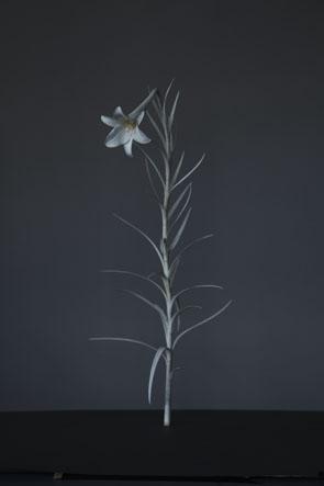 Masaya Hashimoto Takasago Yuri - Takasagoyuri - Lilium ormosanum, 2014 Deer antler  W29 x D 24 x H45 cm  Courtesy of the artist and London Gallery Photo: Tadayuki Minamoto